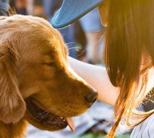 Así crecen las startups de mascotas con Purina y Lanzadera