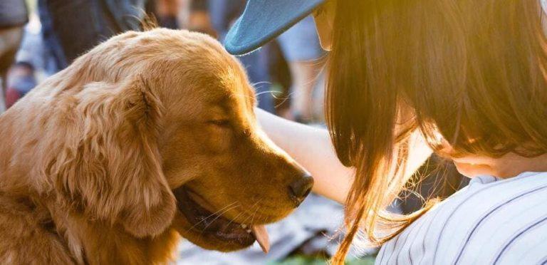 Así crecen las startups de mascotas con Purina y Lanzadera.