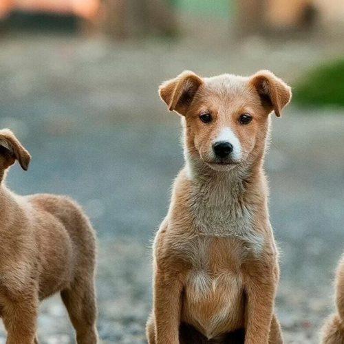 Purina Pet Challenge buscamos startups que adoren a los animales