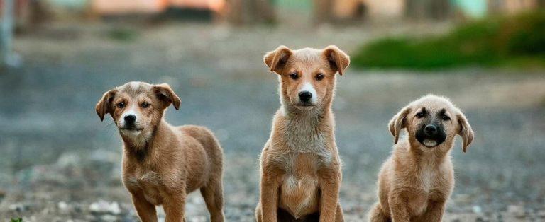 Purina Pet Challenge: buscamos startups que adoren a los animales